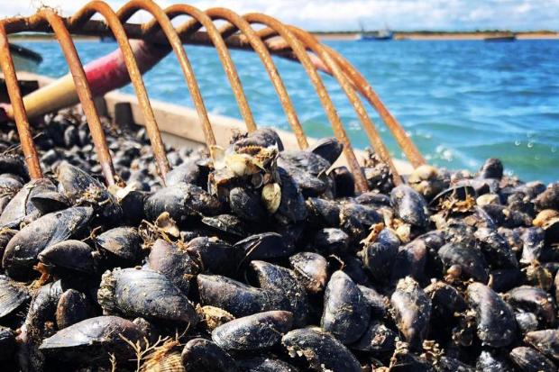 Mussel farming Brancaster