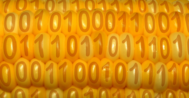 Sweetcorn with binary numbers